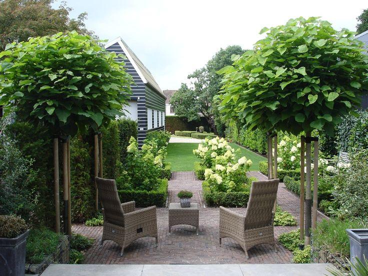 Groene tuin met boompjes en hortensia