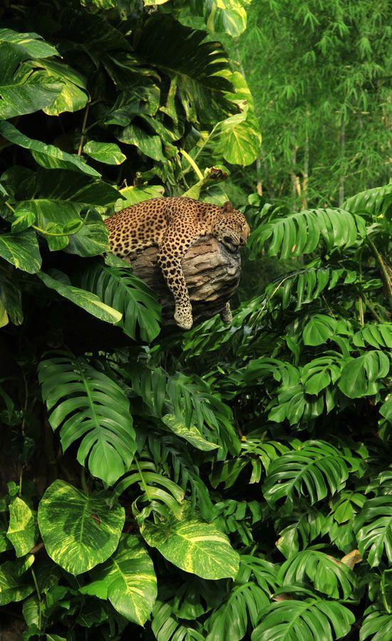 """Sleeping Jaguar in the jungle."" Shop Matthew Williamson Beachwear."