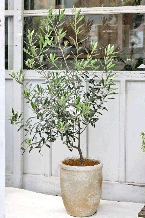観葉植物・ガーデニング雑貨・花寄せ植えの通販ならサザンフィールドをご利用ください。開店祝いの贈り物やインテリアにおすすめの観葉植物・花・多肉植物・ハーブの寄せ植えやかわいい雑貨を販売をしております。