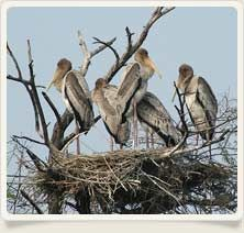 Rajasthan Explored provides information about Keoladeo Ghana National Park, located in Bharatpur. The Keoladeo Ghana National Park which is also known as Bharatpur Bird Sanctuary is a renowned wildlife destination.