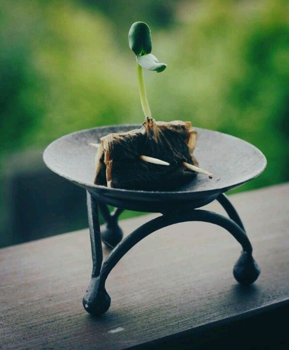Reuse used tea bags as seed starters!  Plant entire thing.