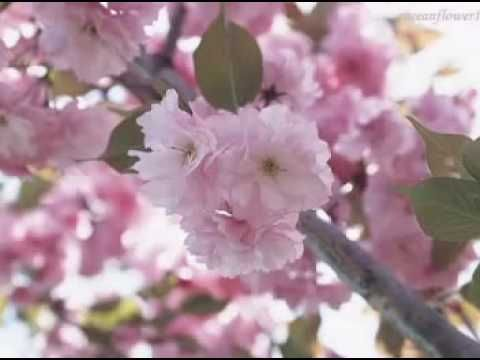 Spring Symphony  - ANDRE RIEU - Relaxing instrumental music