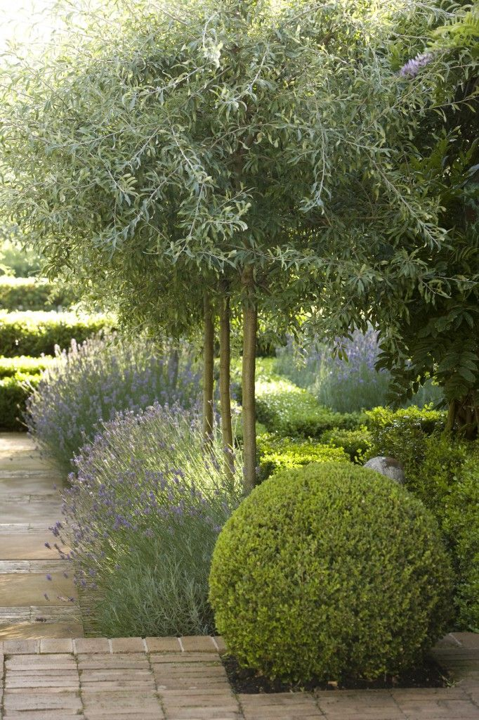 Sydney-based garden designer Peter Fudge has never been fazed by the fact that Australia is the driest continent in the world. He creates hazy, romantic gardens with drifts of color—which require almost no water. Our favorite is his study in lavender: