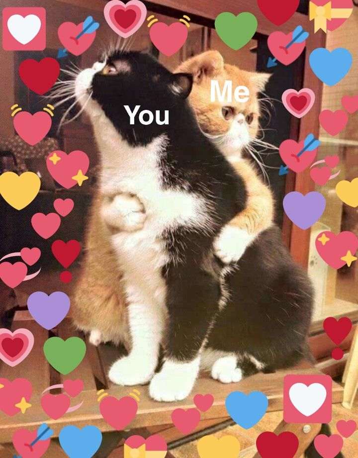 Love for a friend 💕 Cute love memes, Love memes, Cute memes