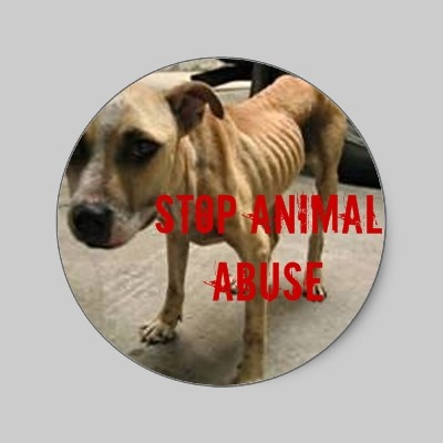 Stop Animal Abuse Stickers