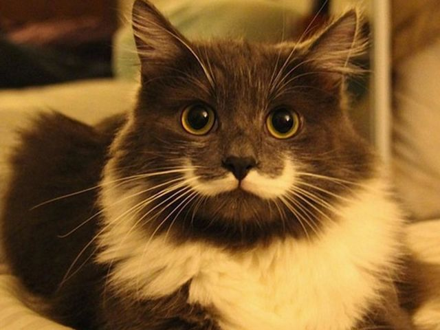 Which Famous Internet Cat Are You?  You are... Hamilton, the Hipster Cat!  You had a mustache before it was cool. You have a hit web-series and love pizza... even though you know you should try being gluten free. You're Hamilton, the hipster cat, unimpressed and incredibly cute.