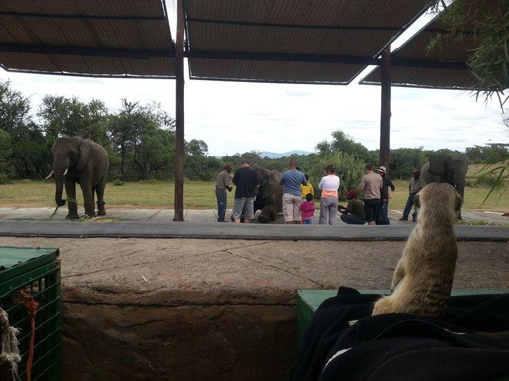 Elephant interaction...