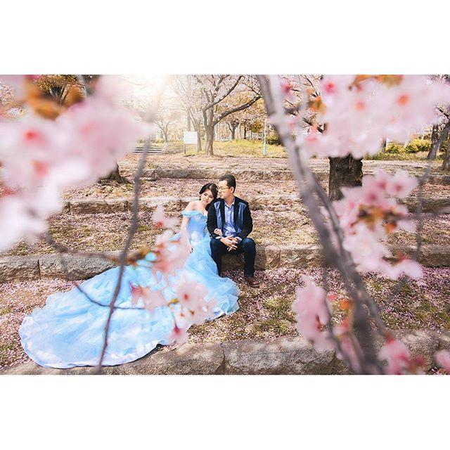 【romytomyando】さんのInstagramをピンしています。 《#japan #kyoto #osaka #fushimiinari #shibuyacrossing #shibuya #preweddinginternational #tokyo #tokyoprewedding #japanprewedding #preweddingphotography #prewedding #weddinginspiration #couple #happyday #fun #sakura #cherryblossoms #cherryblossomfestival #日本》