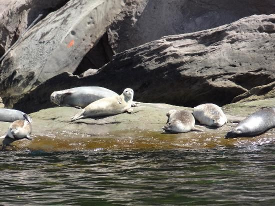 Plongee Forillon- Snorkelling with harbour seals in Gaspe Bay, Quebec
