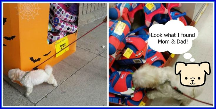 How We Pamper Our Toopy at PetSmart #CBIAS #ad