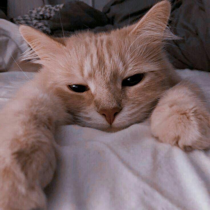Pin Oleh R Di Aesthetic Binatang Kucing Cantik Gambar Hewan Lucu
