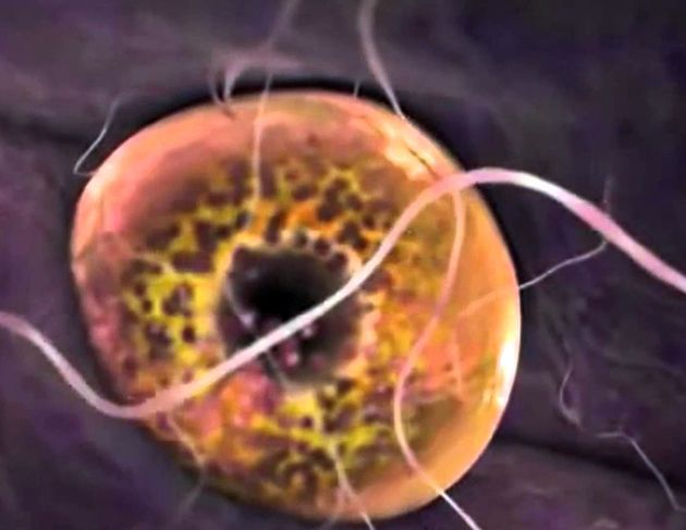 Sabía usted que la Hormona Antimüleriana es la responsable de los fármacos en el organismo?