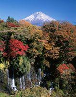 紅葉の白糸の滝と富士山の風景 秋 静岡県[01857008118] - 写真素材・ストックフォト|アマナイメージズ