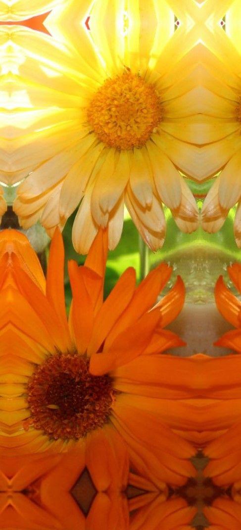 Es ist so leicht, Ringelblumensalbe selbst herzustellen. Sie kann zur Hautpflege oder als Wundsalbe genutzt werden.
