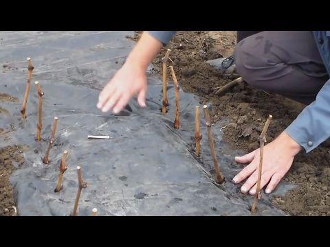 Устройство виноградной школки - YouTube