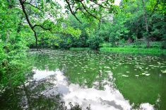 Pond in forest stock photo
