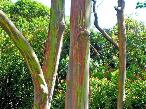 Rainbow Plants and Rainbow Animals