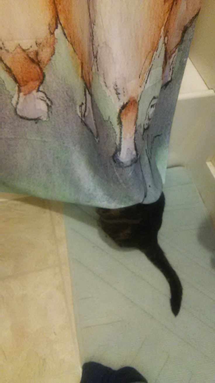 My pervert cat is watching my girlfriend take a shower. http://ift.tt/2AZbpIh