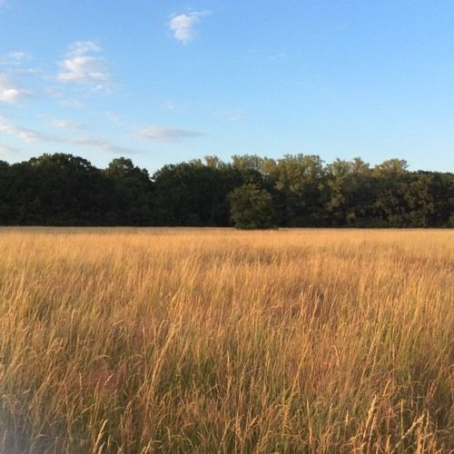 Very old field by Jacek Tabisz on SoundCloud