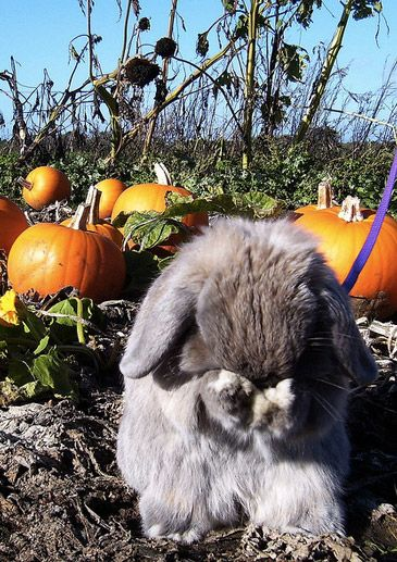 Grooming in the Pumpkin Patch