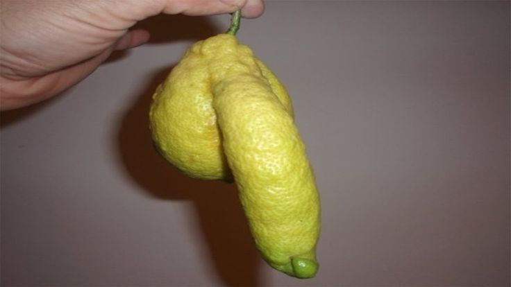 10 Penis Facts You Probably Didn't Know