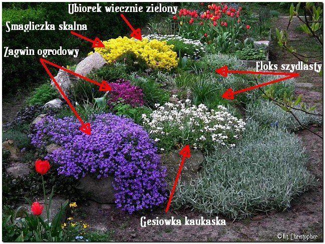 Tzw Wiosenna Piatka Na Skalniaki To 5 Podstawowych O Na Stylowi Pl Plants Garden Plants Garden