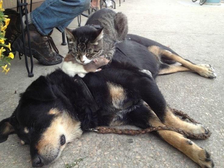 Все невыспавшиеся люди в следующей жизни обязательно реинкарнируются в котов (зевАет)