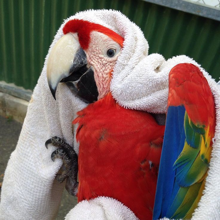 Work experience is usually awful. But if you're really lucky, you could up sticks to Costa Rica and become one with nature by becoming a parrot ambassador.