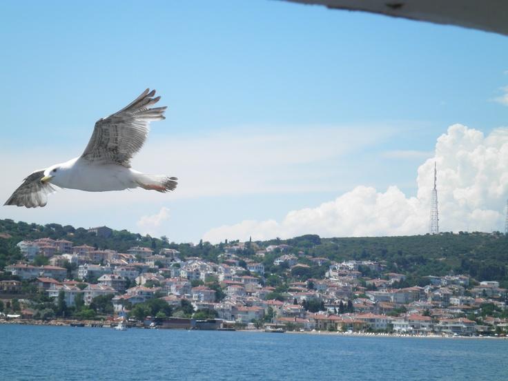 a seagull in bosphorus, istanbul.
