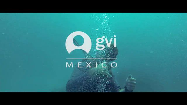 We take a look at what you can expect from the GVI volunteering projects in Pez Maya, Mexico.