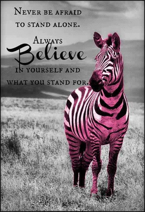 Pink Zebra Girls!  Join Pink Zebra and be a part of a great group of zebras! http://zebracandlesprinkles.com  #joinpinkzebra
