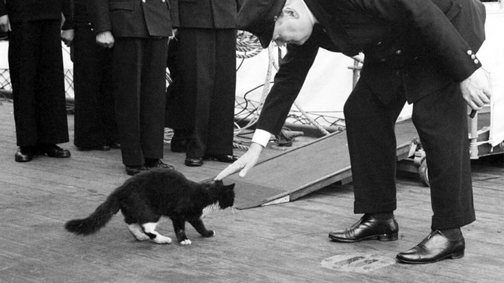 """""""Unsinkable Sam"""", a German cat who survived the sinking of the Bismarck, HMS Cossack and the HMS Ark Royal."""