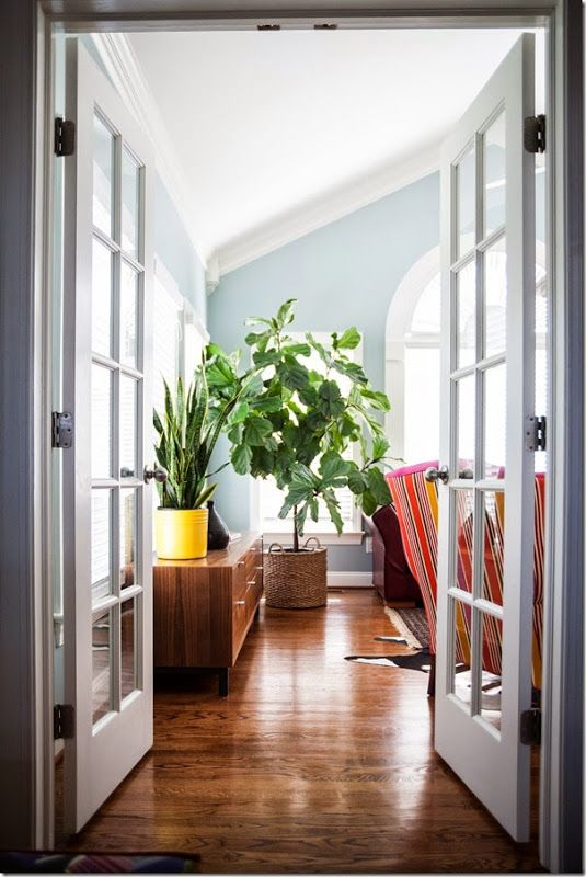 fiddle leaf fig tree for the living room