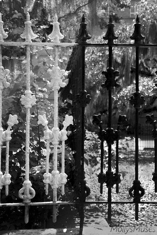 Black and White Photography - Savannah - Southern Gothic Gate, MollysMuses