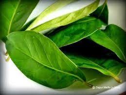 SERBA SERBI: Daun salam dan batang serai sebagai obat asam urat...