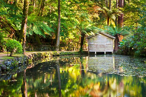 The Boat House. Alfred Nicholas Gardens. Dandenong Ranges.