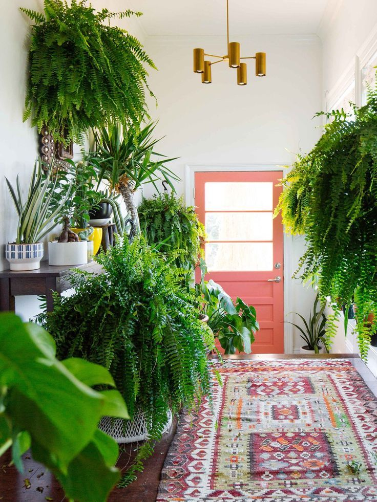Love all these plants in this hallway. Nature in the home