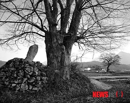 Photo by Oh Sang-Jo / The Dangsan Tree