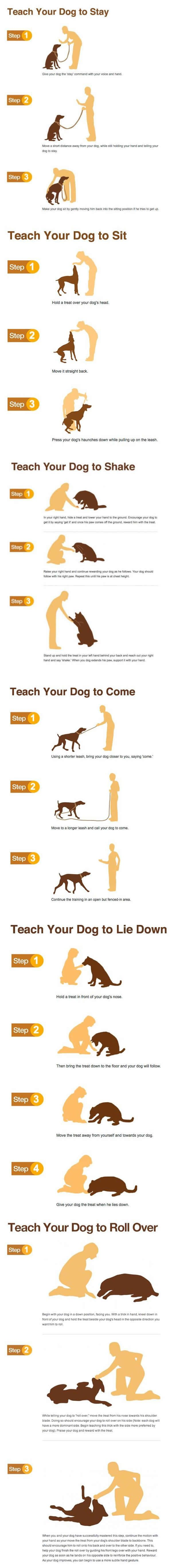 Teach your dog some tricks