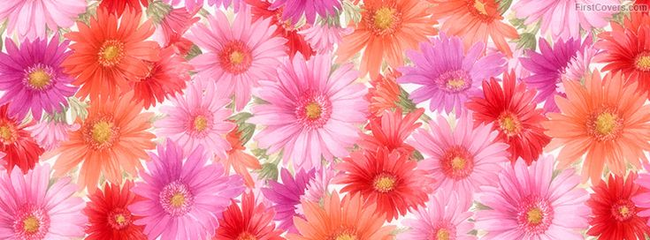 Colorful Flowers cover  covers for Facebook pages