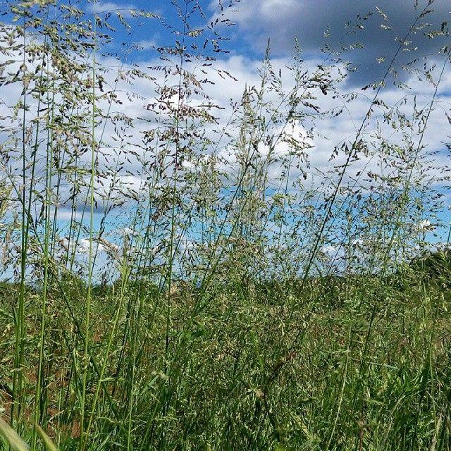 Punto di vista #prato#verde#natura#tra#fili#erba#cielo#azzurro