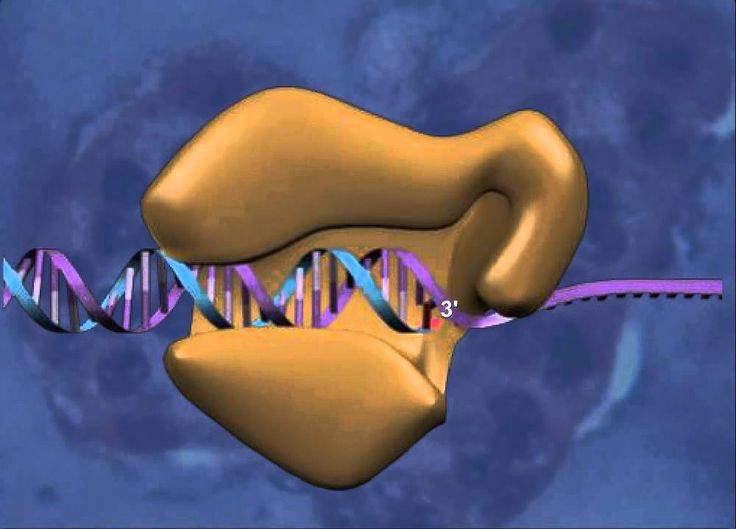 Interactives . DNA . About this Interactive - Learner