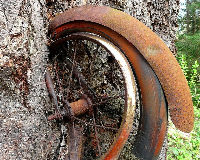 Don't Leave Your Bicycle Next to a Tree for Thirty Years by sea turtle