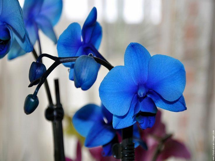 les 25 meilleures idées de la catégorie tatouage d'orchidée bleu