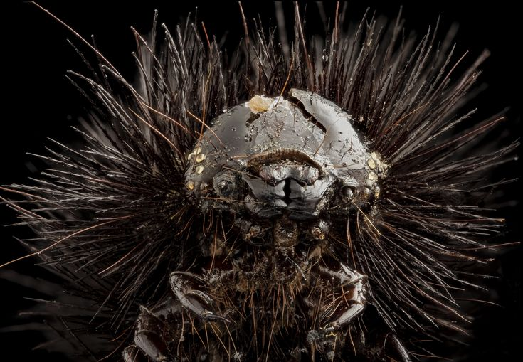 Desiccated Giant Leopard Moth Caterpillar, Sam Droege USGS [5410 x 3744] x-post /r/HI_Res