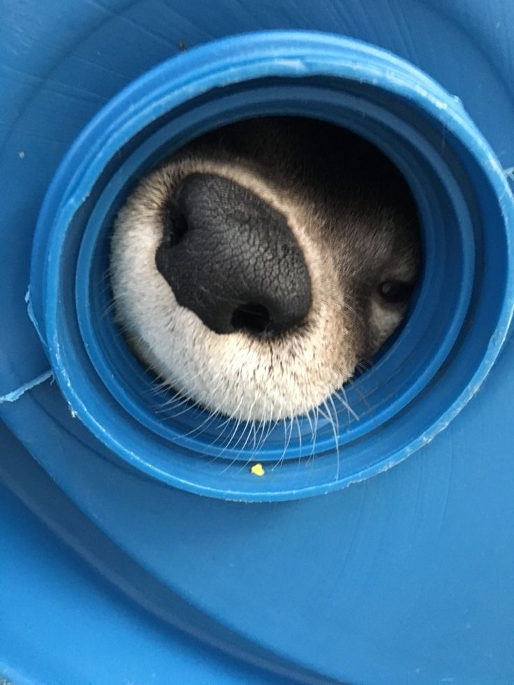 Otter snoot is ready for a boop