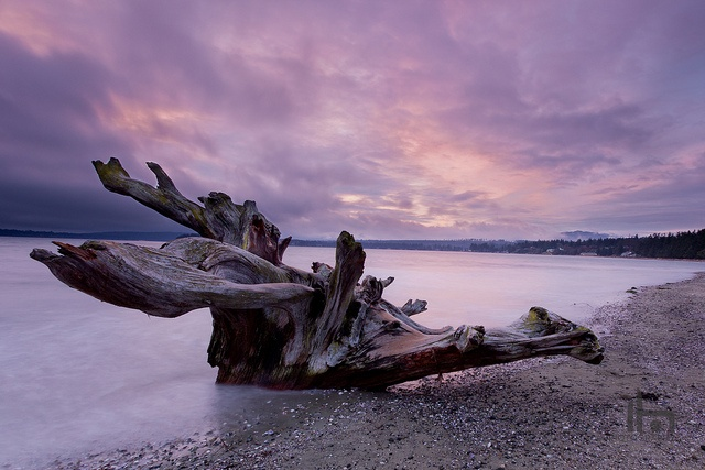Driftwood at Rathtrevor Beach Provincial Park, Parksville, Vancouver Island