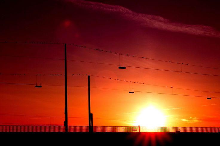#birds #orange skies #silhouette #sky #sun #sunglow #sunset #transmission lines