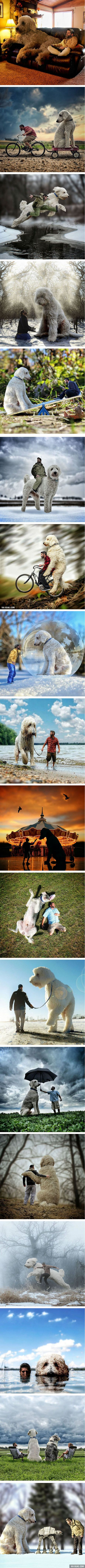 The Best Giant Dogs Ideas On Pinterest Giant Dog Breeds Big - Guy uses photoshop to turn his miniature dog into a giant