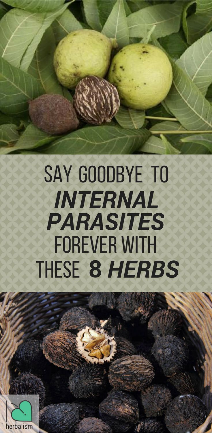 Internal parasites can trigger multiple health problems. Herbs are one way to strengthen the body and treat intestinal parasites. Here are 8 herbs that kill internal parasites naturally